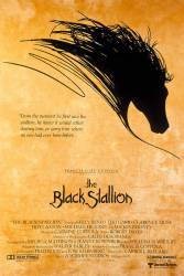 The Black Stallion picture