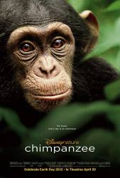 Chimpanzee picture